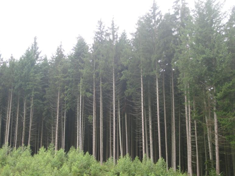 Los verdes y altísimos árboles de las lindes del Bosque Negro, desde el Club de Caza local.