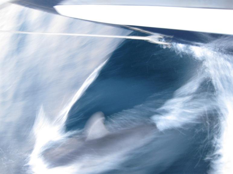 Nos encontrábamos a levante de la Punta del Bergantín y cuando amaneció nos vimos rodeados por decenas de delfines de obscuros lomos, que nos acompañaron durante un buen trecho.